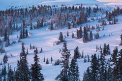 De winterlandschap met veel sneeuw en bomen Royalty-vrije Stock Afbeeldingen
