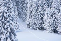 De winterlandschap met voetpad in de sneeuw Stock Fotografie