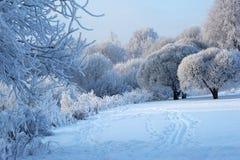 De winterlandschap met wilgen en installaties Stock Fotografie