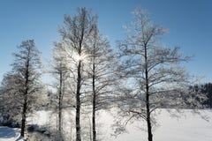 De winterlandschap met Zonneschijn Stock Fotografie