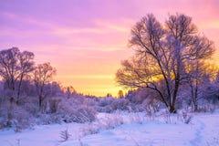 De winterlandschap met zonsondergang en het bos Stock Afbeelding