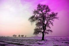 De winterlandschap in ochtend, sneeuw en boom met Ultraviolette toon Stock Fotografie