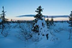 De winterlandschap in de ochtend van een december-dag stock afbeelding