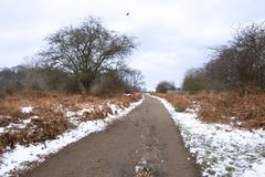De winterlandschap in Richmond Park Recente de herfstbladeren en snow-covered grond stock afbeelding