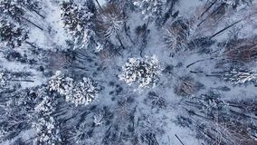 De winterlandschap in Siberië stock videobeelden