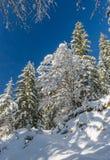 De winterlandschap, Slovenië Stock Fotografie