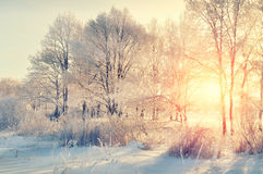 De winterlandschap - sneeuw de winterbomen in het de winterbos bij de zonsondergang met zonlichtstralen stock afbeeldingen