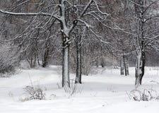 De winterlandschap, sneeuwbos Stock Foto