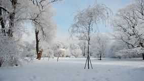 De winterlandschap - snow-covered bos in zonnig weer stock footage