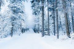 De winterlandschap van bos en het eenzame mens lopen Stock Afbeelding