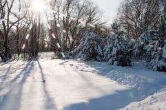 De winterlandschap van het stadspark na een zware sneeuwval in de winter Stock Foto