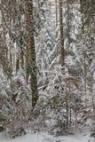 De winterlandschap van hoofdzakelijk vergankelijk bos in zonsonderganglicht Royalty-vrije Stock Fotografie