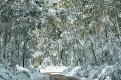 De winterlandschap van landweg en hoge die bomen met sneeuw wordt behandeld stock afbeeldingen