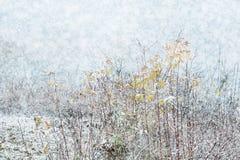 De winterlandschap van de sneeuwvalvakantie met dunne struiken van bomen in t royalty-vrije stock afbeeldingen
