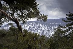De winterlandschap van Troodosbergen stock afbeeldingen