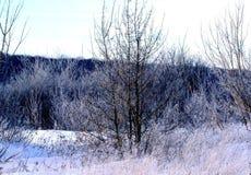 De winterlandschap van de vroege lente Royalty-vrije Stock Afbeelding