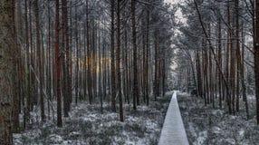 De winterlandschap van vroege ochtend royalty-vrije stock afbeeldingen