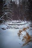 De winterlandschap, verticale richtlijn, snow-covered bos, rivier stock foto's
