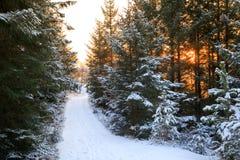 De winterlandschap - weg en de zonsondergang achter bos Stock Foto