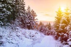 De winterlandschap - de weg tussen bos en wormkleurenzonsondergang, alles is behandeld met sneeuw Royalty-vrije Stock Afbeelding