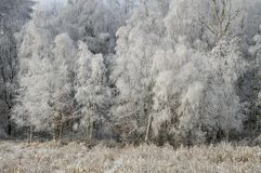 De winterlandschappen Royalty-vrije Stock Fotografie