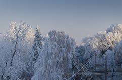 De winterlandschappen Stock Afbeeldingen