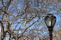 De winterlicht Stock Afbeeldingen