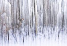 De winterlicht op Bomen met Sneeuw en Hertensamenvatting Royalty-vrije Stock Afbeeldingen