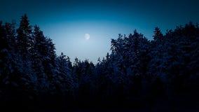 De wintermaan bij nacht stock foto's