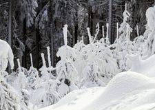 De wintermening in de boskerstbomen in de sneeuw Stock Foto's