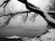 De wintermening over de rivier Royalty-vrije Stock Foto's