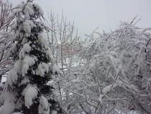 De wintermeningen Stock Foto's
