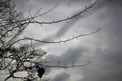 De wintermiddag met witte hemel en droge takken royalty-vrije stock foto's