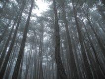 De wintermist in het bergbos Stock Foto's