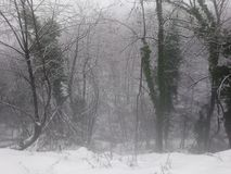 De wintermist van de Treelinesneeuw stock foto