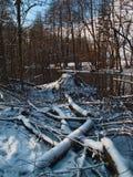 De winterochtend in een moeras Stock Afbeelding
