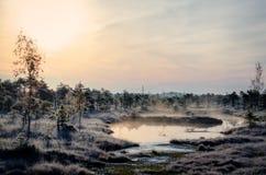 De winterochtend in het moeras Stock Afbeelding