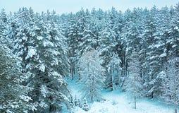 De winterochtend in de winterbos stock afbeelding