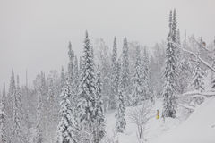 de winteronweer in een bos Stock Afbeelding
