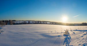 De winterpano met zonnestralen, bos Royalty-vrije Stock Foto