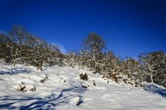 De winterparadijs Royalty-vrije Stock Fotografie
