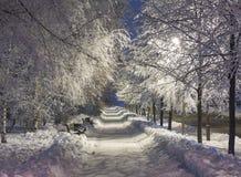 De winterpark in de avond met sneeuw wordt behandeld die royalty-vrije stock fotografie