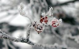 De winterpatroon Stock Afbeelding
