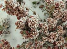 De winterpatroon op bloemen Royalty-vrije Stock Afbeelding