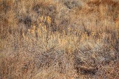 De winterprairie Toneel bij het Park van de Staat van Meerpueblo, Colorado Royalty-vrije Stock Fotografie