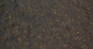 De winterrivier in de Karpatische bergen stock footage