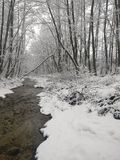 De winterrivier in het bos stock fotografie