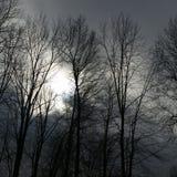De winters Komst Stock Foto's