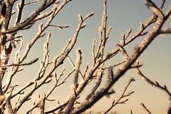 De wintersaanraking Stock Foto's