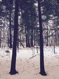 De wintersbos stock fotografie